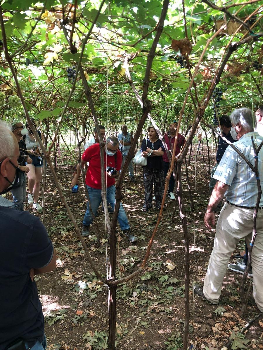 Innovazioni sostenibili di processo e di prodotto per il miglioramento dell'uva da tavola siciliana - INNOVITIS